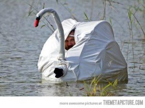 funny-photographer-inside-swan-camouflage